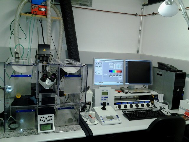 Confocal microscope:  Leica TCS SP5